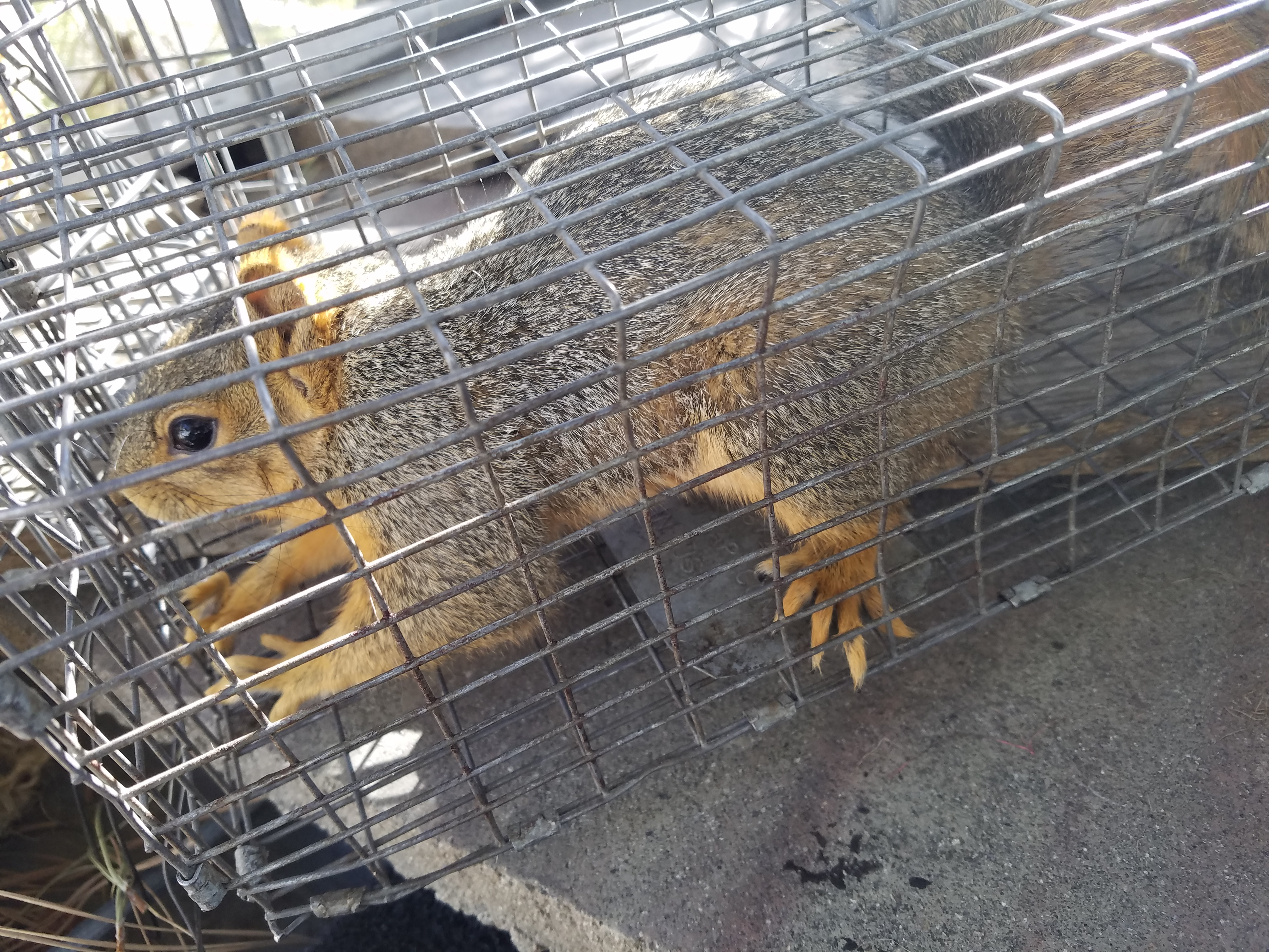 Animal Damage Control – Help with Animal Trapping and Wildlife Problems